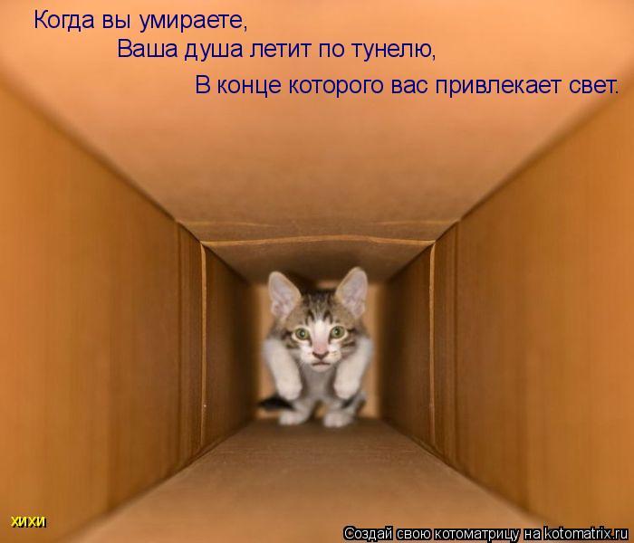 Котоматрица: Когда вы умираете, В конце которого вас привлекает свет. Ваша душа летит по тунелю, хихи