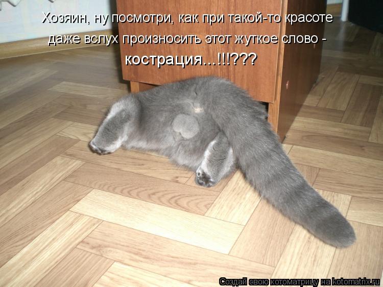 Котоматрица: Хозяин, ну посмотри, как при такой-то красоте  даже вслух произносить этот жуткое слово -  кострация...!!!???