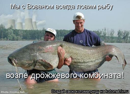 Котоматрица: Мы с Вованом всегда ловим рыбу возле дрожжевого комбината!