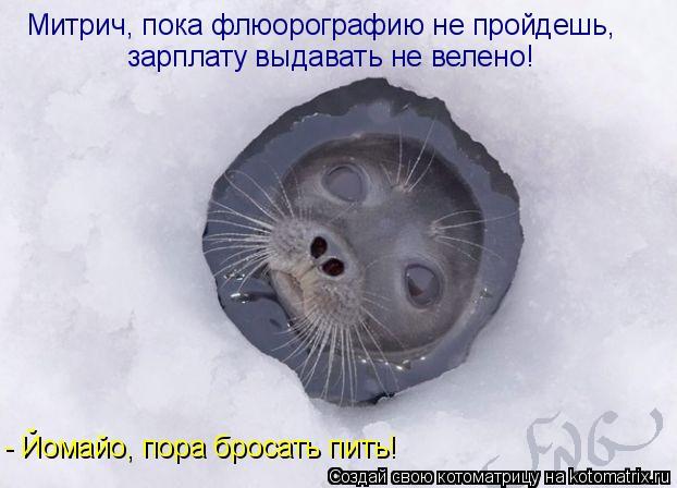 Котоматрица: Митрич, пока флюорографию не пройдешь, зарплату выдавать не велено! - Йомайо, пора бросать пить!