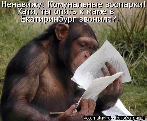 Котоматрица: Ненавижу! Комунальные зоопарки! Катя, ты опять к маме в  Екатиринбург звонила?!