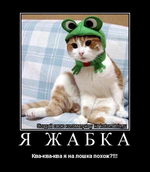 Котоматрица: я жабка Ква-ква-ква я на лошка похож?!!!