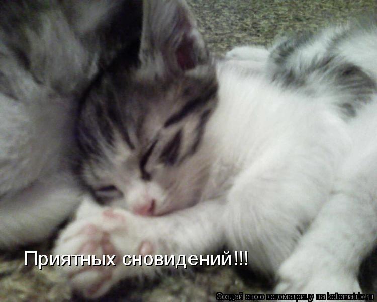 Котоматрица: Приятных сновидений!!!