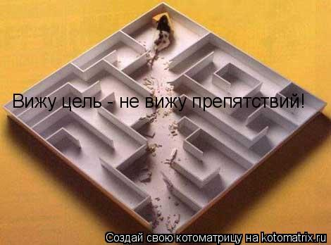 Котоматрица: Вижу цель - не вижу препятствий!
