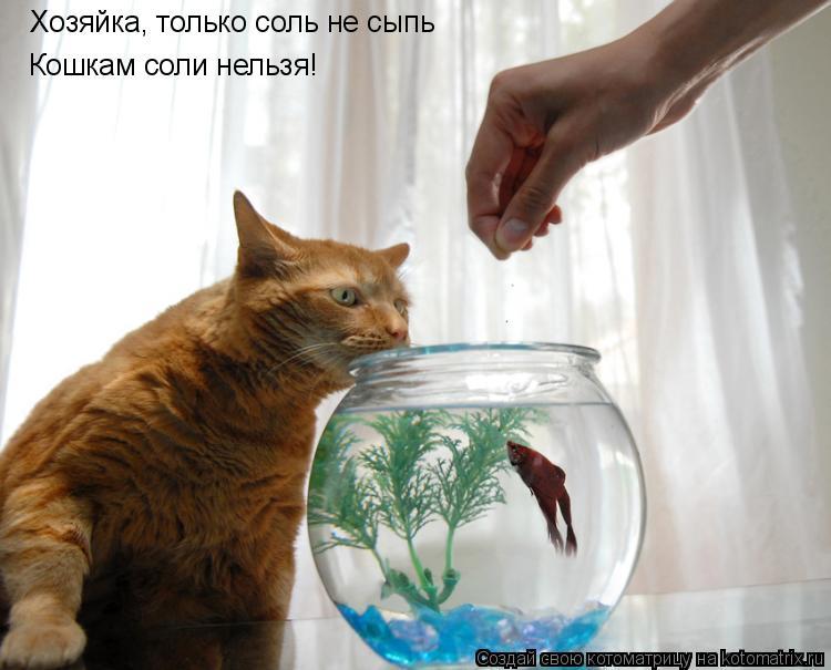 Котоматрица: Хозяйка, только соль не сыпь Кошкам соли нельзя!