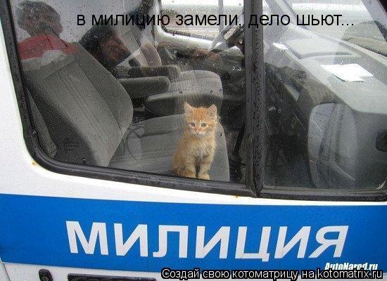 Котоматрица: в милицию замели, дело шьют...
