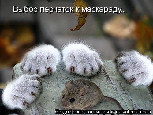 Котоматрица: Выбор перчаток к маскараду...