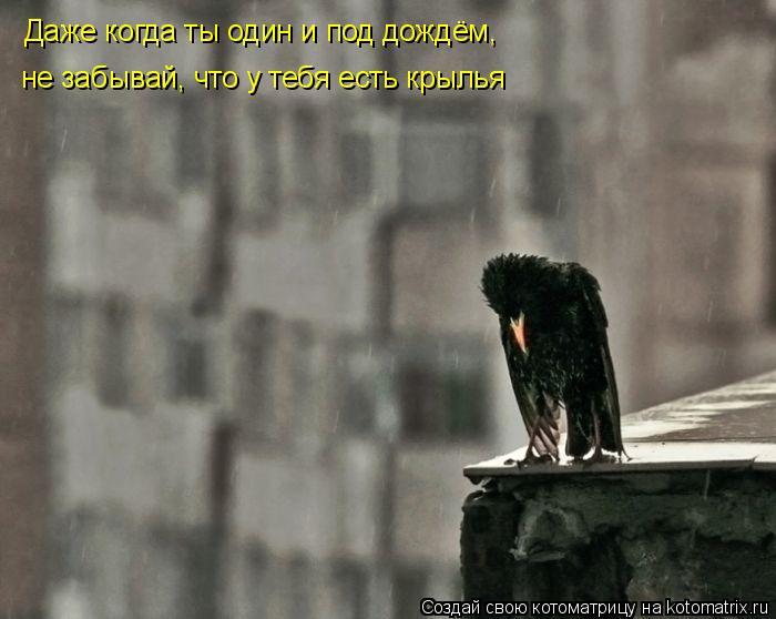 Котоматрица: Даже когда ты один и под дождём, не забывай, что у тебя есть крылья