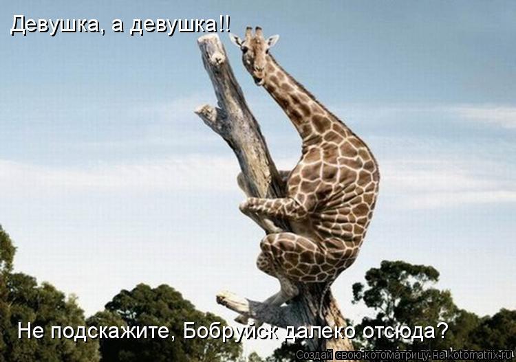 Котоматрица: Девушка, а девушка!! Не подскажите, Бобруйск далеко отсюда?