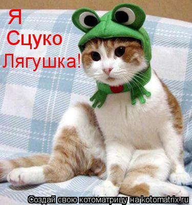 Котоматрица: Я Сцуко Лягушка!
