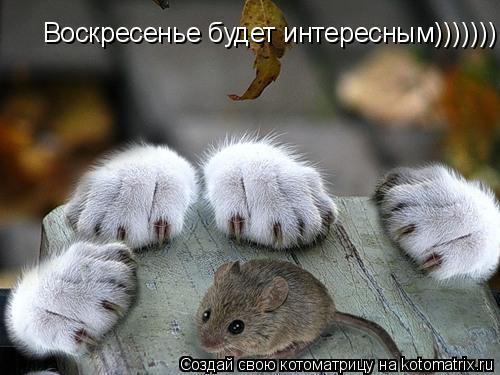 Котоматрица: Воскресенье будет интересным)))))))