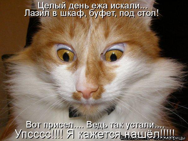Котоматрица: Целый день ежа искали...  Лазил в шкаф, буфет, под стол! Вот присел.... Ведь так устали.... Упсссс!!!! Я кажется нашёл!!!!!