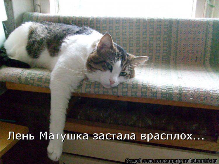Котоматрица: Лень Матушка застала врасплох...