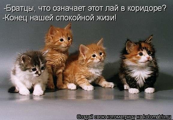 Котоматрица: -Братцы, что означает этот лай в коридоре? -Конец нашей спокойной жизи!