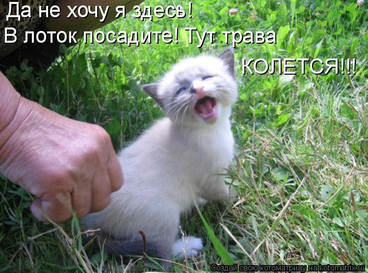 Котоматрица: Да не хочу я здесь! В лоток посадите! Тут трава  КОЛЕТСЯ!!!