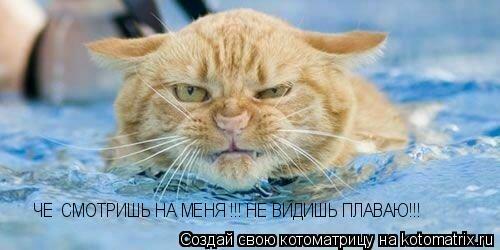 Котоматрица: ЧЕ  СМОТРИШЬ НА МЕНЯ !!! НЕ ВИДИШЬ ПЛАВАЮ!!!