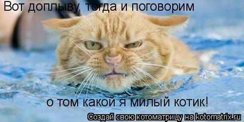 Котоматрица: Вот доплыву, тогда и поговорим   о том какой я милый котик!