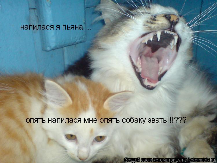 Котоматрица: напилася я пьяна.... опять напилася мне опять собаку звать!!!???