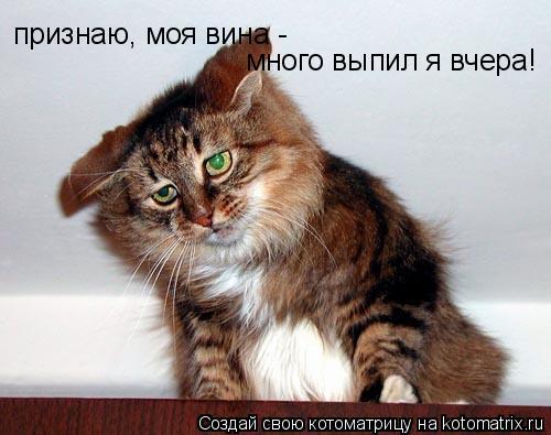 Котоматрица: признаю, моя вина -  много выпил я вчера!
