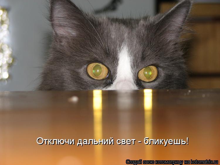 Котоматрица: Отключи дальний свет - бликуешь!