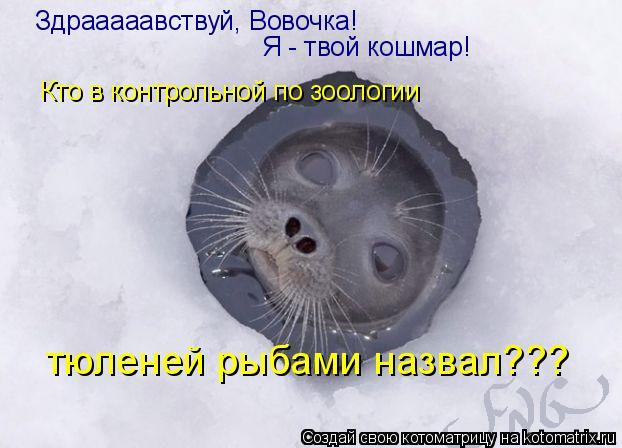Котоматрица: Здрааааавствуй, Вовочка! Я - твой кошмар! Кто в контрольной по зоологии тюленей рыбами назвал???