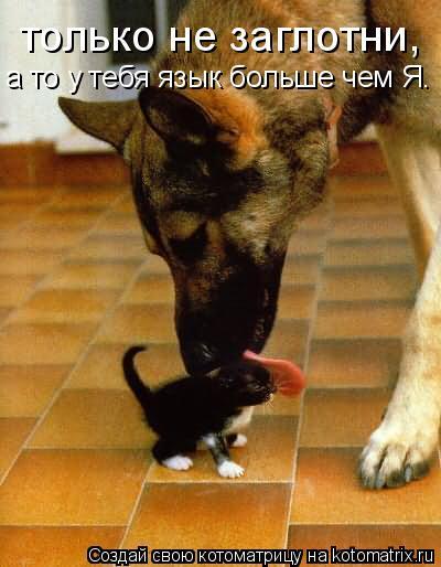 Котоматрица: только не заглотни, а то у тебя язык больше чем Я.