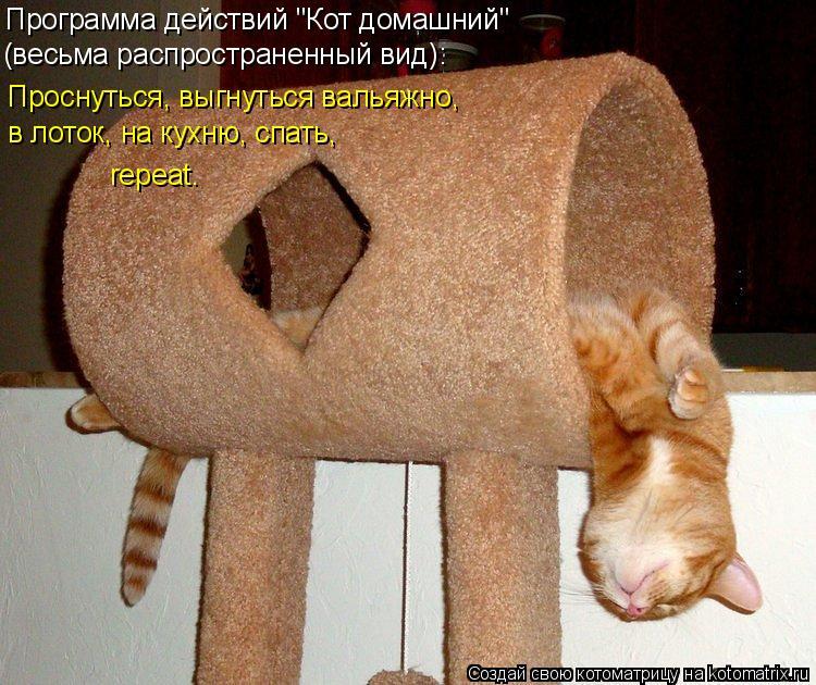 """Котоматрица: Программа действий """"Кот домашний"""" (весьма распространенный вид): Проснуться, выгнуться вальяжно, в лоток, на кухню, спать, repeat."""
