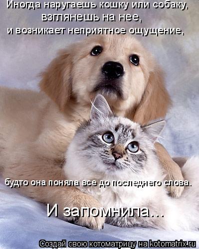 Котоматрица: Иногда наругаешь кошку или собаку, взглянешь на нее, и возникает неприятное ощущение, будто она поняла все до последнего слова. И запомнила.