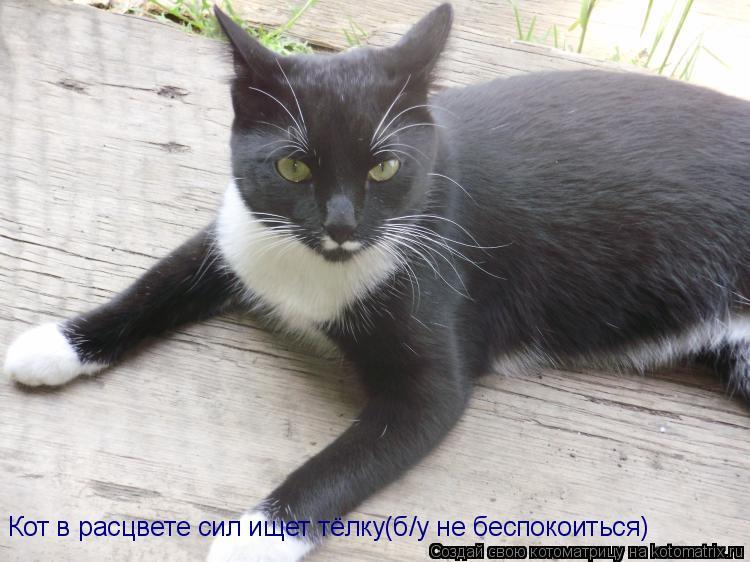 Котоматрица: Кот в расцвете сил ищет тёлку(б/у не беспокоиться)