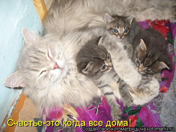 Котоматрица: Счастье-это когда все дома!