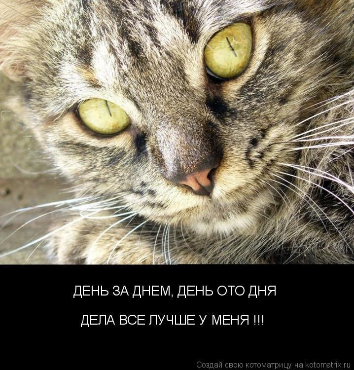 Котоматрица: ДЕНЬ ЗА ДНЕМ, ДЕНЬ ОТО ДНЯ ДЕЛА ВСЕ ЛУЧШЕ У МЕНЯ !!!