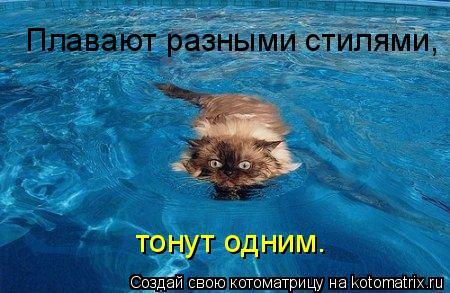 Котоматрица: Плавают разными стилями,  тонут одним.