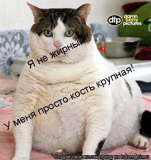 Котоматрица: Я не жирный!!  У меня просто кость крупная!