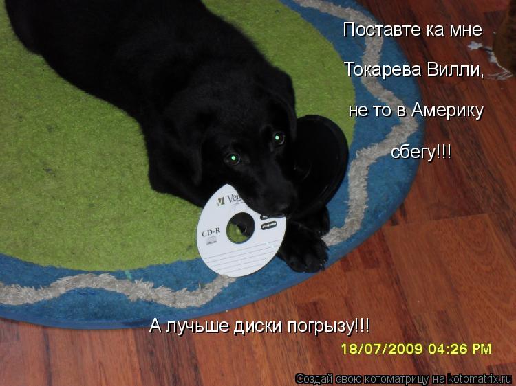 Котоматрица: Поставте ка мне Токарева Вилли, не то в Америку сбегу!!! А лучьше диски погрызу!!!