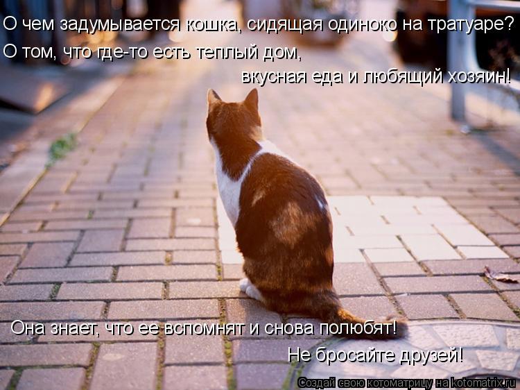 Котоматрица: О чем задумывается кошка, сидящая одиноко на тратуаре? О том, что где-то есть теплый дом,  вкусная еда и любящий хозяин! Она знает, что ее вспо