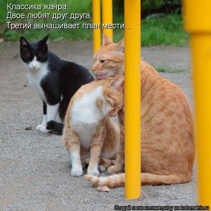 Котоматрица: Классика жанра: Двое любят друг друга,  Третий вынашивает план мести...