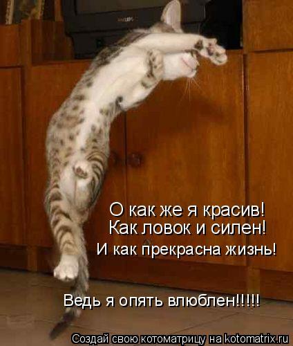 Котоматрица: О как же я красив! Как ловок и силен! И как прекрасна жизнь! Ведь я опять влюблен!!!!!