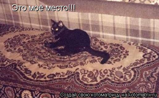 Котоматрица: Это моё место!!!