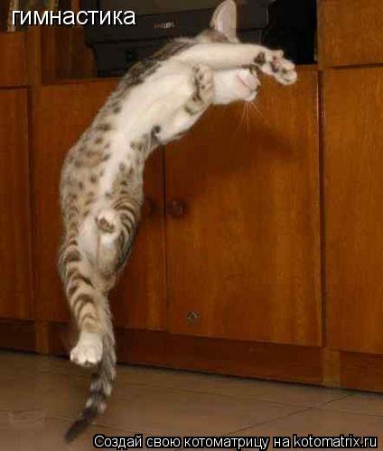 Котоматрица: гимнастика