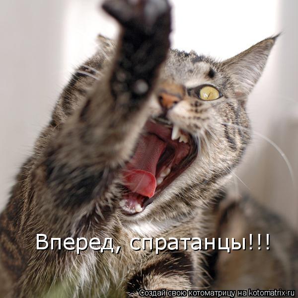 Котоматрица: Вперед, спратанцы!!!