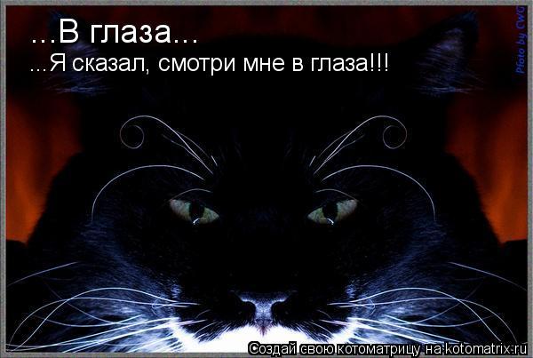 Котоматрица: ...В глаза... ...Я сказал, смотри мне в глаза!!!
