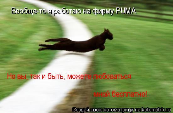 Котоматрица: Вообще-то я работаю на фирму PUMA Но вы, так и быть, можете любоваться  мной бесплатно!