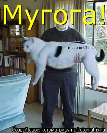 Котоматрица: made in China Мугога!