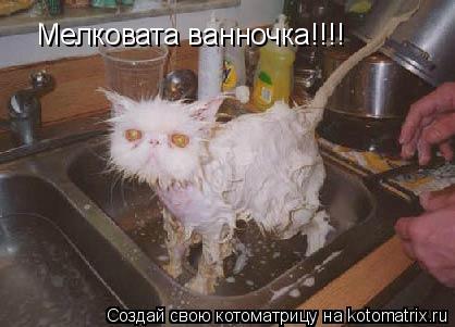 Котоматрица: Мелковата ванночка!!!!