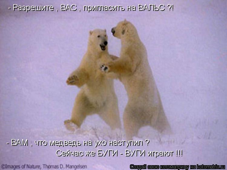Котоматрица: - Разрешите , ВАС , пригласить на ВАЛЬС ?! - ВАМ , что медведь на ухо наступил ? Сейчас же БУГИ - ВУГИ играют !!!