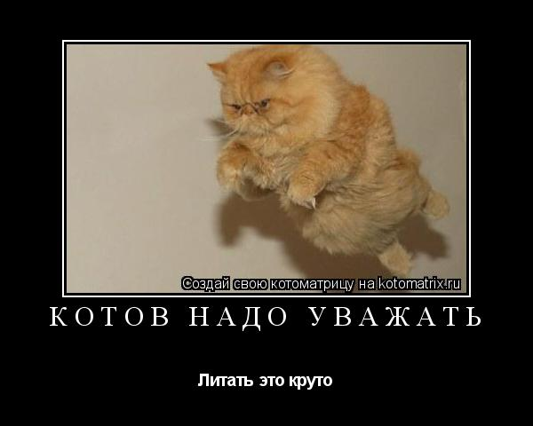Котоматрица: котов надо уважать Литать это круто
