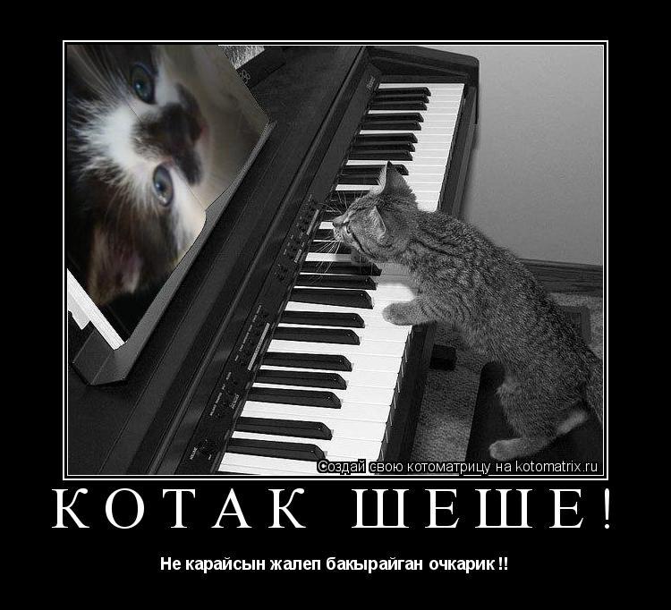 Котоматрица: Котак шеше! Не карайсын жалеп бакырайган очкарик !!