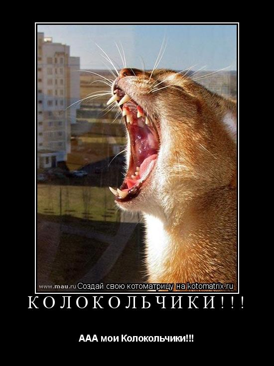 Котоматрица: Колокольчики!!! ААА мои Колокольчики!!!
