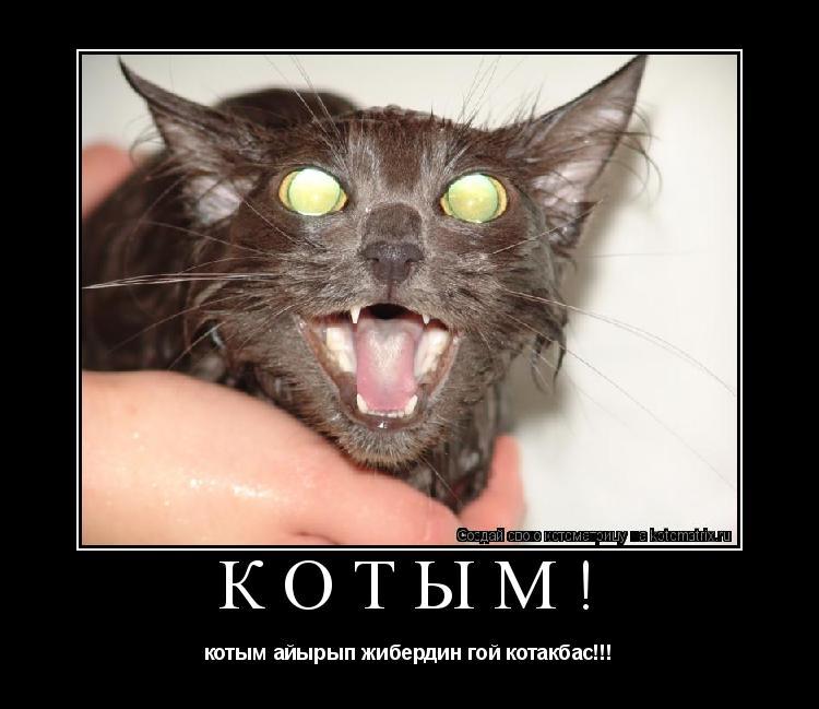 Котоматрица: Котым! котым айырып жибердин гой котакбас!!!