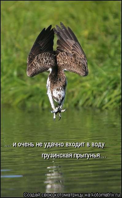 Котоматрица: .... и очень не удачно входит в воду грузинская прыгунья....